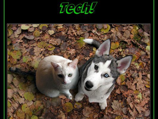 Top Tech for Your Pets [Infographic]