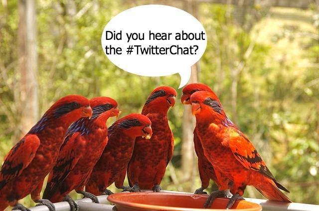 #TwitterChat Birds