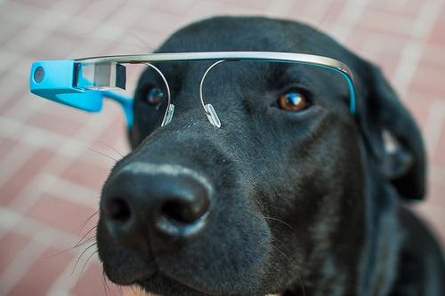 Google Glass Pup