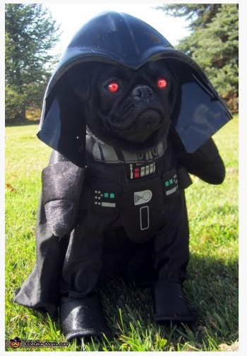 Cute Pet Costumes Pinterest Board