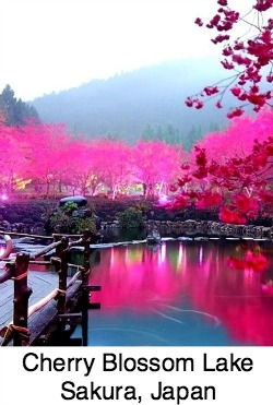 Cherry Blossom Lake, Sakura Japan