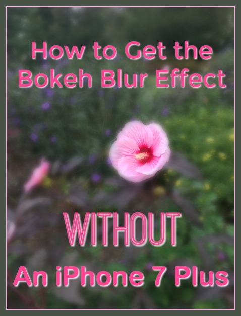 Learn how to use PicMonkey to get the bokeh blurred effect for your photos without an iPhone 7 Plus.